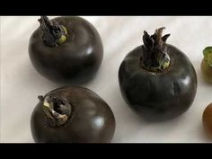 Diospyros nigra, the black sapote, is a species of persimmon. Common names include chocolate pudding fruit, black soapapple and (in Spanish) zapote prieto. Chocolate Pudding Fruit, Rare Species, Seeds For Sale, Tropical Fruits, Planting Seeds, Frozen, Stuffed Peppers, Make It Yourself