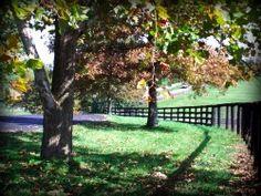 Kentucky - Lexington KY by Lizette Fitzpatrick, www.lizette.us