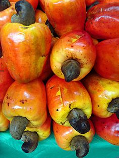 Cajus - Cashew nut on the top of the fruit/ Brazilian Fruit