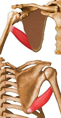 Teres Major - Anatomy - Orthobullets.com