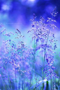 Blue nature by fotografka on DeviantArt Flower Backgrounds, Photo Backgrounds, Wallpaper Backgrounds, Beautiful Nature Wallpaper, Beautiful Landscapes, Beautiful Flowers, Flowers Nature, Purple Flowers, Flower Phone Wallpaper
