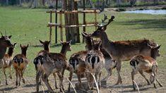 Dančí farma Kangaroo, Giraffe, Animals, Baby Bjorn, Felt Giraffe, Animales, Animaux, Giraffes, Animal