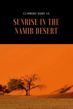 Hike up Dune 45 for sunrise. Visit the otherworldly valley of dead acacia trees at Dead Vlei. Explore the ancient dunes of Sossusvlei, deep in the Namib Desert.