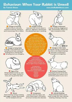 trendy pet bunny care tips house rabbit Meat Rabbits, Raising Rabbits, Pet Bunny Rabbits, Caring For Rabbits, Rabbit Hide, Rabbit Toys, Bunny Care Tips, Baby Bunnies Care, Rabbit Facts