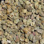Dried Capers – A Zingy Treat!