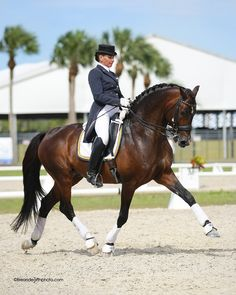 Yvonne Barteau of KYB Dressage riding the Holsteiner Stallion Raymeister, owned by Ginna Frantz of Grand Prix Equestrian in Maple Park, IL.