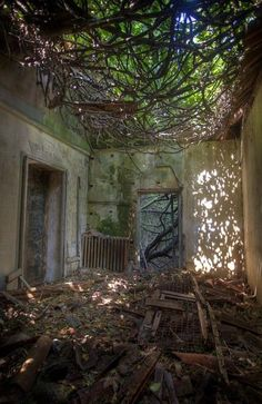Overrun with weeds. Poveglia in Italy is the world's most haunted island and it's up for sale