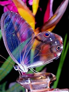 Beautiful butterfly share cute things at www.sharecute.com