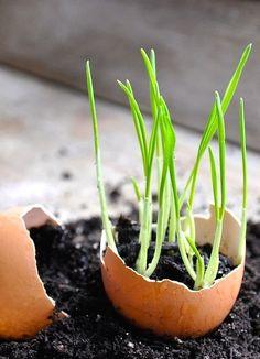 15 Gardening Hacks That Will Change Your Garden's Life.