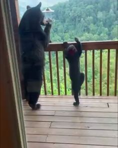 Momma bear and her cub getting some snacks 😍🐻 Cute Animal Videos, Funny Animal Pictures, Nature Animals, Animals And Pets, Wild Animals, Cute Funny Animals, Cute Baby Animals, Gato Gif, Animal Antics