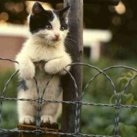 Cat on a wire fence