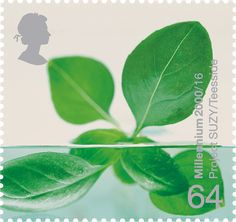 Hydroponic Leaves #SpecialStamp from 2000 'Life And Earth'