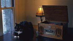 cinemagraph animated gif of cat and vintage record player