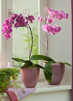 Planting a Summer Garden Orchid Plants, Orchids, Garden Plants, Indoor Plants, Pot Image, Harvest Day, Growing Veggies, Orchid Care, Pots
