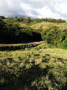 Rural road in Guanacaste Province, Costa Rica.
