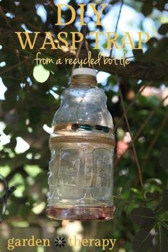 DIY Wasp Trap from a Recycled Bottle. This is what Gren needs to make!