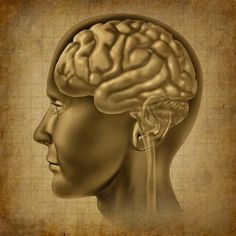 Discover Kratom offer Nootropics to customers at an affordable price. It is helpful in focus and perception, learning and memory, etc. To get more information about  Nootropics product visit our website Elitenootropics.com!