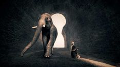 Gregory Colbert - Photography - Ashes & Snow - Animals