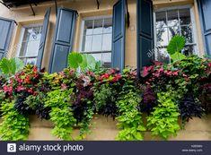 best summer flowers on balcony – Vyhľadávanie Google Window Box Plants, Window Box Flowers, Window Planters, Window Boxes, Shed Windows, Green Windows, Summer Flowers, Pink Flowers, Leafy Plants