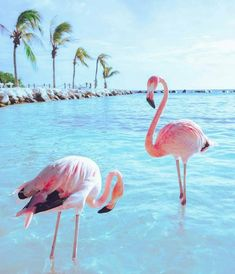 absolutely free adorable flamingo bird wallpaper exceptional : Flamingos will be highly gregarious birds. Flocks numbering while in the plenty might be viewed inside lengthy, curving journey formations as well as . Foto Flamingo, Flamingo Beach, Pink Flamingos, Flamingo Party, Animals And Pets, Baby Animals, Cute Animals, Pink Animals, Nature Animals
