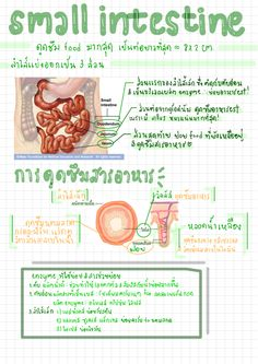 Life Hacks For School, School Study Tips, Science Notes, Science Lessons, Learn Thai Language, Good Notes, English Study, Dental Assistant, Body Systems
