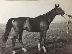 137 Сагар 154 (171 Симпатяга – 170 Гарантия 92), з.-бур.., 1935 г,