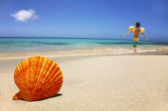 orange shell.....in the sand...