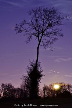 Violet skies, the Moon and Jupiter.  Photo by Jacob Zimmer via EarthSky on FB.
