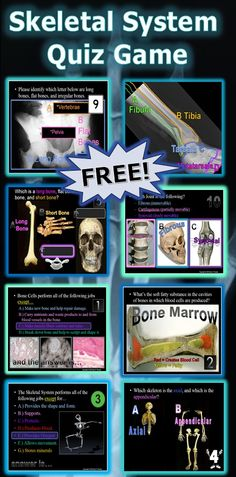 This is a FREE 200 Slide PowerPoint Quiz Game about the human skeletal system. Answers.... Jobs of bone cells, bone marrow, skeletal system jobs, axial vs appendicular skeleton, long bones, short bones, flat bones, irregular bones, tendons and ligments, bones of the leg, bones of the arm, pelvis, ball and socket joing, hinge joint. Answers and worksheet are included. -Enjoy! Science from Murf LLC