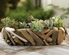 Driftwood & Succulent Arrangement