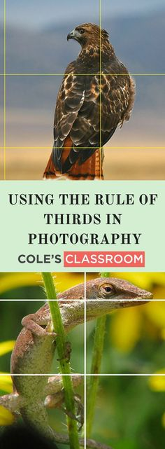 Photography Rules and Tips:Using the Rule of Thirds in Photography. Learn more at: https://www.colesclassroom.com/using-rule-thirds-photography/