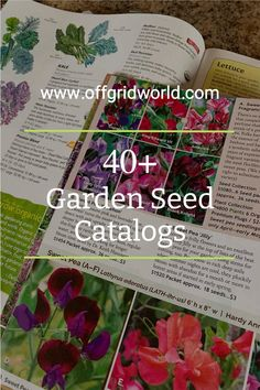 One thing I love about seed catalogs is that they aren't just for ordering seeds. They usually offer a ton of inspiration for gardens suited to different climates. Some even sell live plants and trees, rare edibles, and gardening equipment. Here is a list of more than 40 seed catalogs you can request by mail or view online. #gardening #gardencatalogs #gardener #seeds #gardenseeds Herb Seeds, Garden Seeds, Planting Seeds, Garden Plants, Garden Catalogs, Seed Catalogs, Sweet Pea Seeds, Bee Friendly Plants, Fruit Seeds