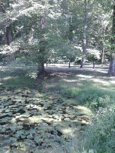 Looking across the Lily Pond at Hope Springs Institute. Photo by Trish Breedlove