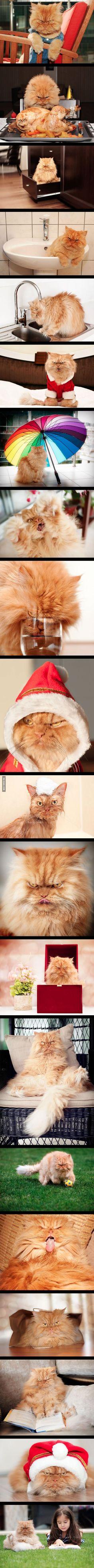 Darf ich vorstellen: Garfi, die wütendste Katze der Welt