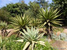 Über Instagram hier eingefügt #Südafrika-#Urlaub:  http://ift.tt/1ZNAWt1 - 3 Tipps zum #Sightseeing in #Pretoria #southafrica #wb1001rb #wbesaesa @south_africa_through_my_eyes #wbpinsa  #photooftheday #reisen #afrika #africa #travelblogger #germanbloggers #reiseblogger Botanischer Garten