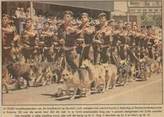 Bourkes Luck Doggies parade in Pretoria