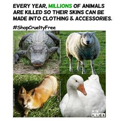 Keep animals in mind when shopping for back-to-school clothing items! Look for cruelty-free fabrics such as cotton, cotton flannel, polyester, and other synthetic materials. #WearVegan #AnimalsAreNotFabric #KindTeacher