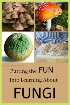 Think studying fungi is boring? Think again. Learn what makes members of Kingdom Fungi unique, explore the many ways fungi benefit life on our planet, and investigate fungi with hands-on activities and videos. Science Tools, Science Resources, Science Lessons, Life Science, Teacher Resources, Planets Activities, Hands On Activities, Cool Science Experiments, Teaching Biology