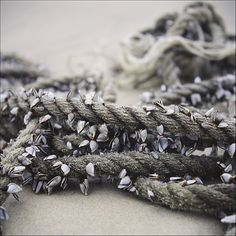 Boat rope with clams Boat Rope, Arthur Curry, Sea Captain, Black Sails, Pirate Life, Ocean Themes, Thing 1, Pirates Of The Caribbean, The Little Mermaid