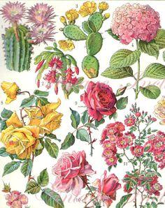 1906 louis fairfax muckley english 1862 1926 orchids illustration floral botanical. Black Bedroom Furniture Sets. Home Design Ideas