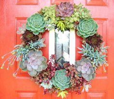 Succulent wreath planted with sedum and tender succulents like echeveria. Echeveria, Succulent Wreath, Deco Originale, Cactus Y Suculentas, Succulents Garden, Hanging Succulents, Succulent Plants, Door Wreaths, Garden Inspiration