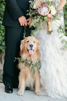 Bride Meg says that Tommy Shaw, the couple's golden retriever is their best friend and that the day just wouldn't have been complete without him standing by their side, (and on her dress) throughou...