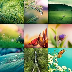 Nature Photos with colour