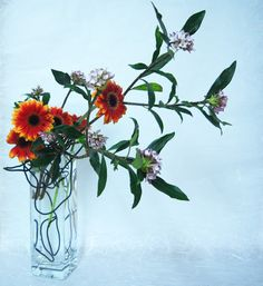 Daphnes and gerberas with black wire