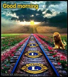 Lion Icon, Lions Clubs International, Lion Poster, Good Morning, Texas, Icons, Posters, India, Organization