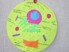 7th Grade Plant Cell Model | Sierra's cell is an excellent model that other students may use as an ...