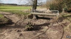BBC say UK Drought areas threat to Wildlife. Photo of dried up River Pang