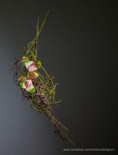 Hanging Arrangement  Ikebana: Ilse Beunen Photography: Ben Huybrechts Material: Cornus, Birch, Anthurium  #ikebana #sogetsu
