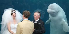 This bride was upstaged at her own wedding. By a whale. | indy100