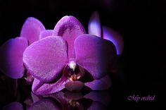 Mon orchidée - My orchid